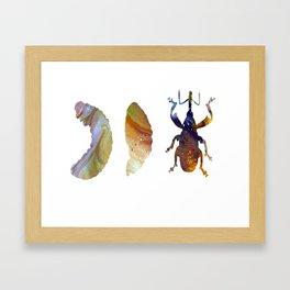 Boll Weevil Framed Art Print