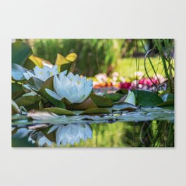 Water Water Lilies on Summer Pond Canvas Print