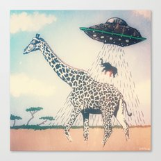 Meanwhile in Africa... Canvas Print
