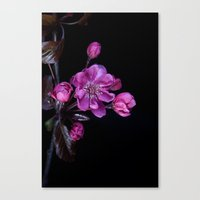 cherry blossom Canvas Prints featuring Cherry Blossom by CreativeByDesign