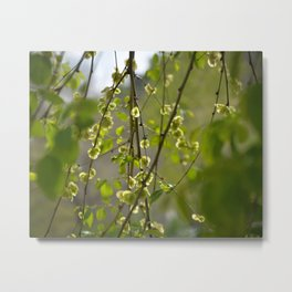 Having a Green Moment Metal Print