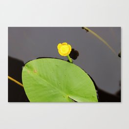 Yellow waterlily with lily pad Canvas Print