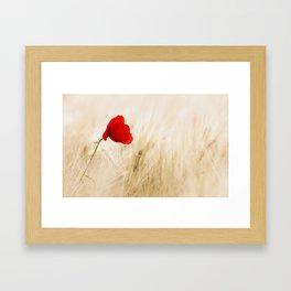 Single Red Poppy Blowing in a Field Framed Art Print