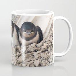 Swallow nestlings sitting in nest Coffee Mug