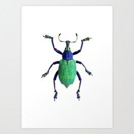 Eupholus Weevil Beetle Art Print