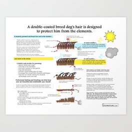 Double-Coated Breed Dog Grooming Infographic Art Print