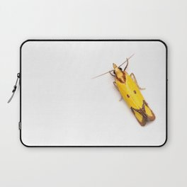 Sulphur Knapweed Moth (Agapeta zoegana) Laptop Sleeve