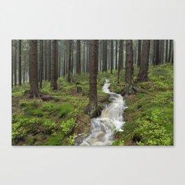 Water always flows downhill Canvas Print