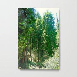 Muir Woods Study 5 Metal Print