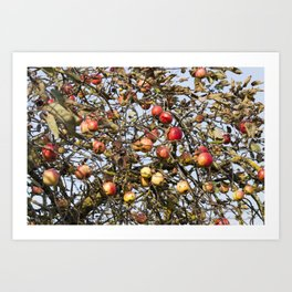 red apples on the branches Art Print