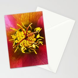 Christmas rose / Helleborus niger  Stationery Cards