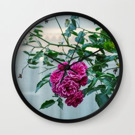 Pink purple flower rose, in city centre Utrecht, landscape travel photography Wall Clock