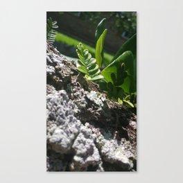 Shine Down, Green Canvas Print