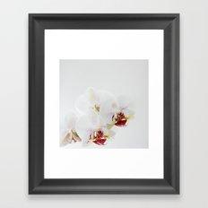 :: orchidea :: Framed Art Print