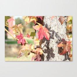 Texas Leaves Canvas Print