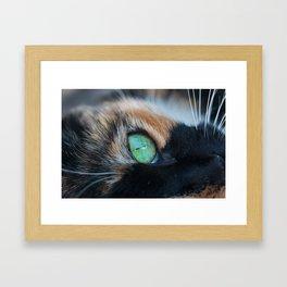 Cats eye Framed Art Print