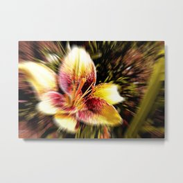 flower ,  blossom ,  bloom. lily ,  lilia ,  lilly Metal Print