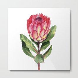 Watercolor Protea Metal Print