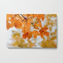 Orange Autumn Leaves Metal Print