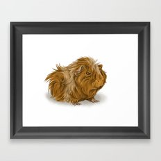 grumpy old guinea pig  Framed Art Print