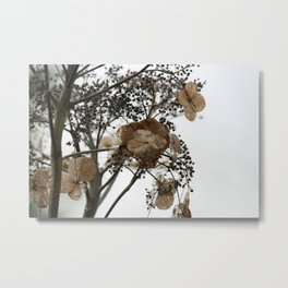 Shadows of Perfection, photograph of a withering flower Metal Print