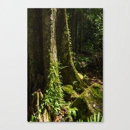 Sunlit Rainforest Canvas Print