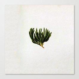 Botanical Moss Canvas Print
