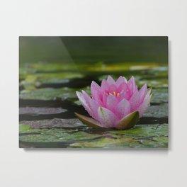 Pink Waterlilly Metal Print