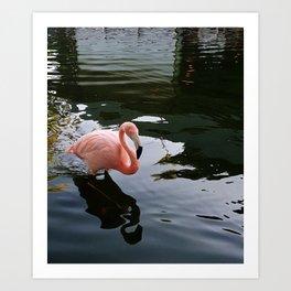 my flamingoo Art Print