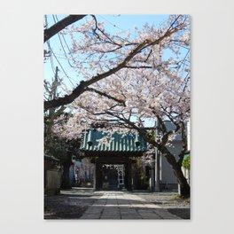 Sakura Spring Canvas Print