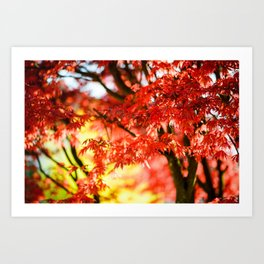 Colorful red autumn foliage with blured background Art Print