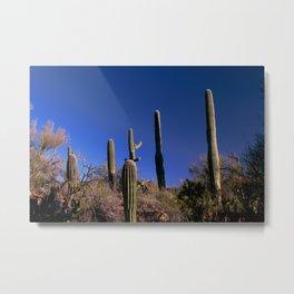 Picture Rocks Cactus 2067 Metal Print