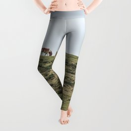 Asturcon, Asturian pony Leggings