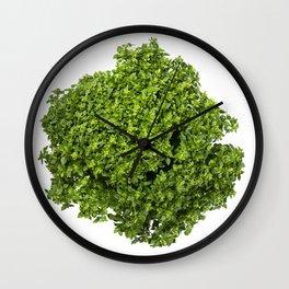 Fresh leaves of a Greek dwarf basil Wall Clock