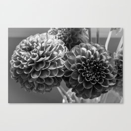 Black and White Dahlia  Canvas Print