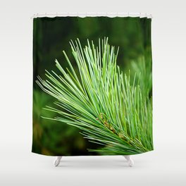 White pine branch Shower Curtain