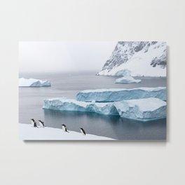 Penguins  of Antarctica - travel photography & landscapes Metal Print