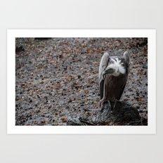 vulture after rainin' Art Print