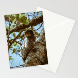 Monkey in a Tree in Brazil  Stationery Cards