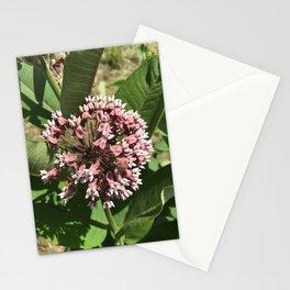 Standing Elm Milkweed Stationery Cards