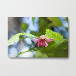 Salmonberry Blossom Photography Print Metal Print