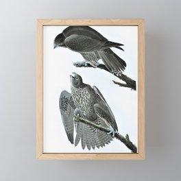 Labrador Falcon - John James Audubon Framed Mini Art Print