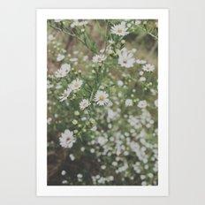 wildflowers. Art Print