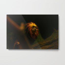 Monkey Photography Print Metal Print