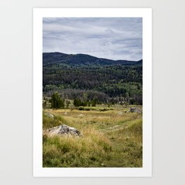 Grassy Meadow with Green Pine Trees and the Colorado Rocky Mountains in the Distance Art Print
