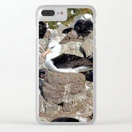 Albatross Colony Clear iPhone Case