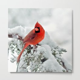 Cardinal on Snowy Branch #2 Metal Print