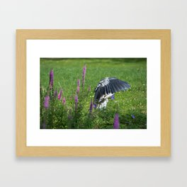 Welcome Heron Framed Art Print
