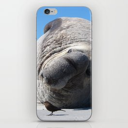 Southern Elephant Seal iPhone Skin