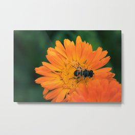 Summer Flowers and the Honeybee Metal Print